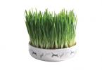 Bästa-kattgräset