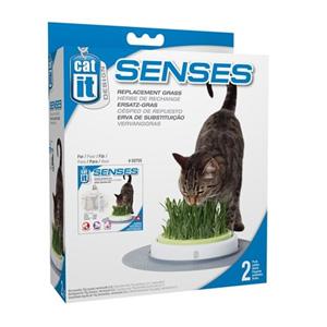 Cat It Senses Grass Garden