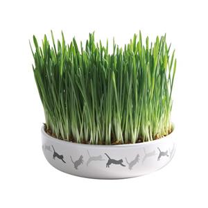 Kattgräs med keramikskål