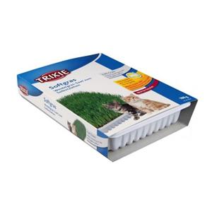 Mjukt kattgräs vitaminberikad